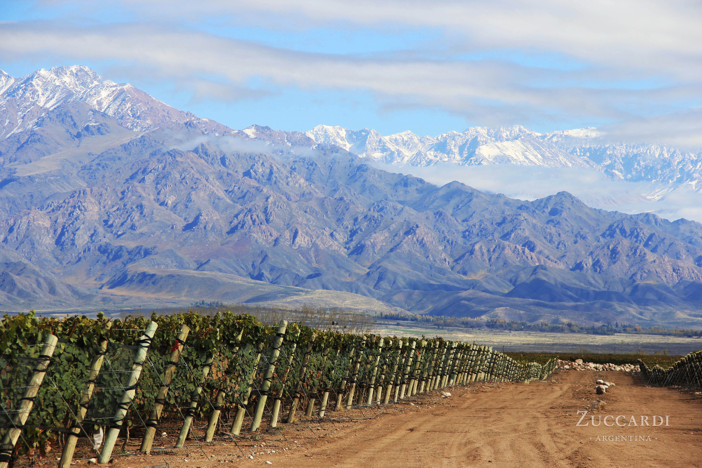 Zuccardi vineyards - Finca Piedra Infinita