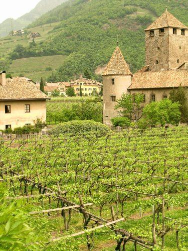 Bolzano vineyard, Alto Adige, Italy