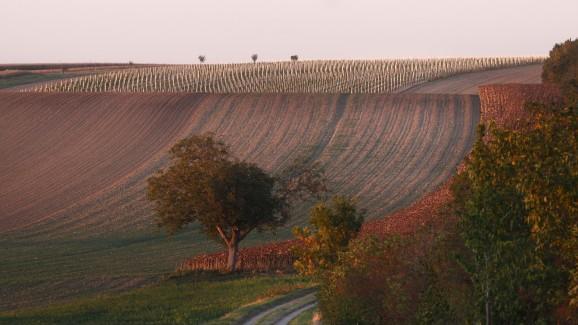 Pratsch vineyard in Austria