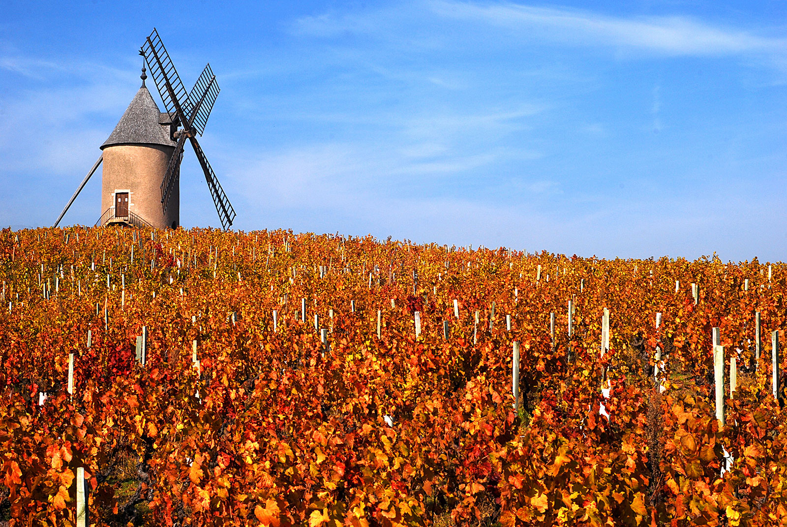 The famous namesake windmill that crowns Moulin-à-Vent. ©Château du Moulin-à-Vent