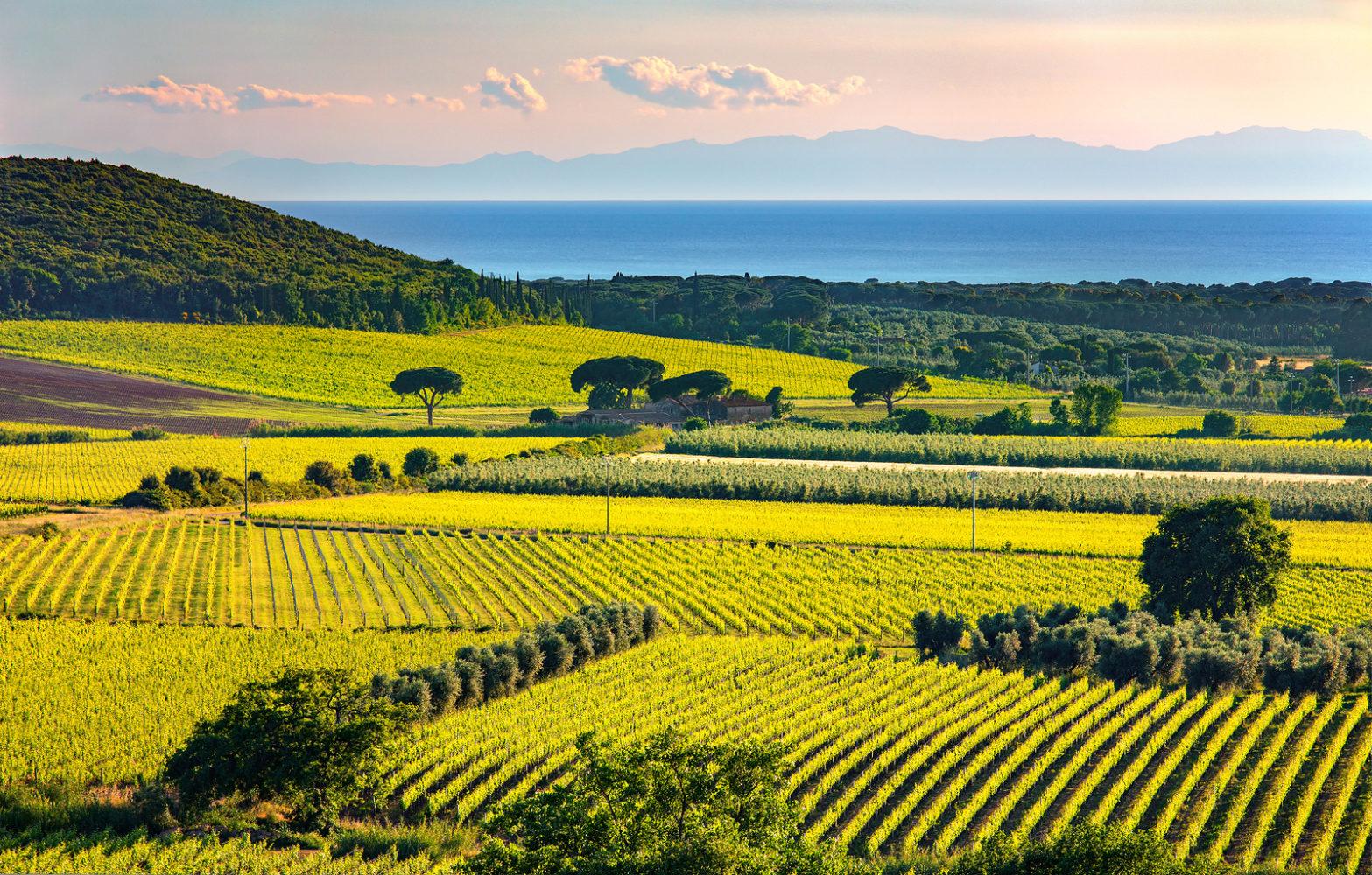 Bolgheri and Castagneto vineyard and Elba island on background. Maremma Tuscany Italy Europe.