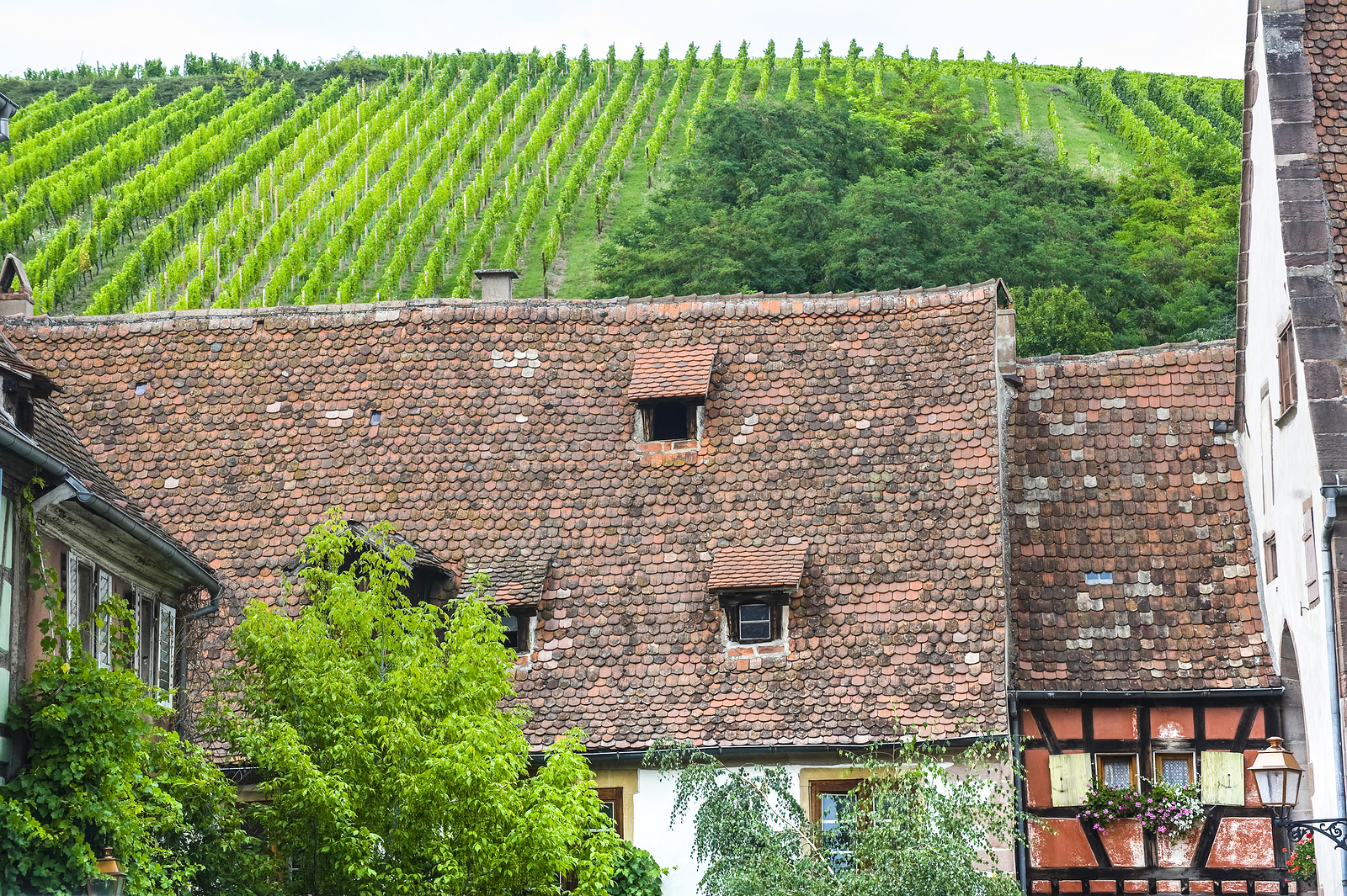 The Schoenenbourg vineyard above Riquewihr, France.