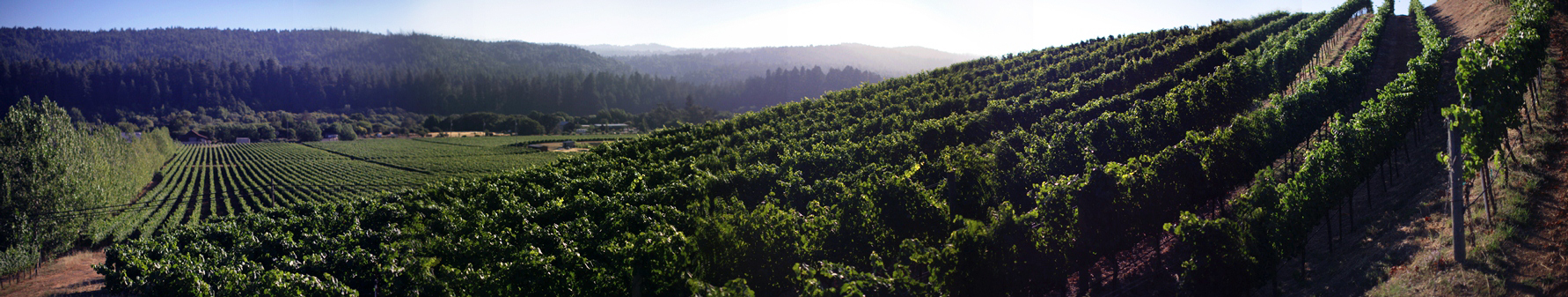 FEL Savoy Vineyard panorama