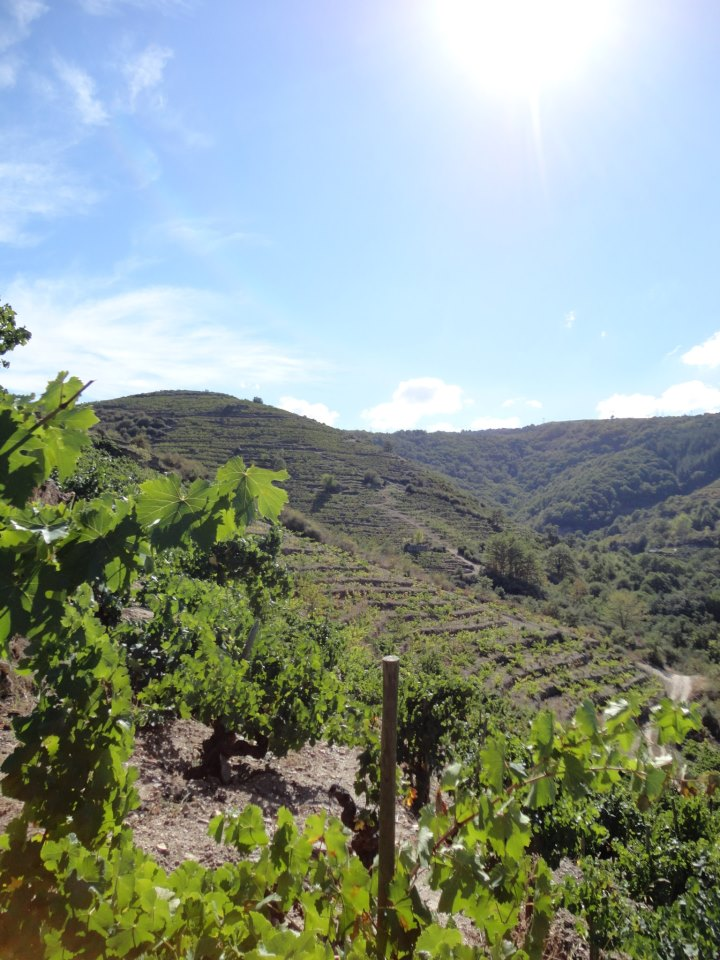 Vineyards of Dominio do Bibei, Ribeira Sacra DO