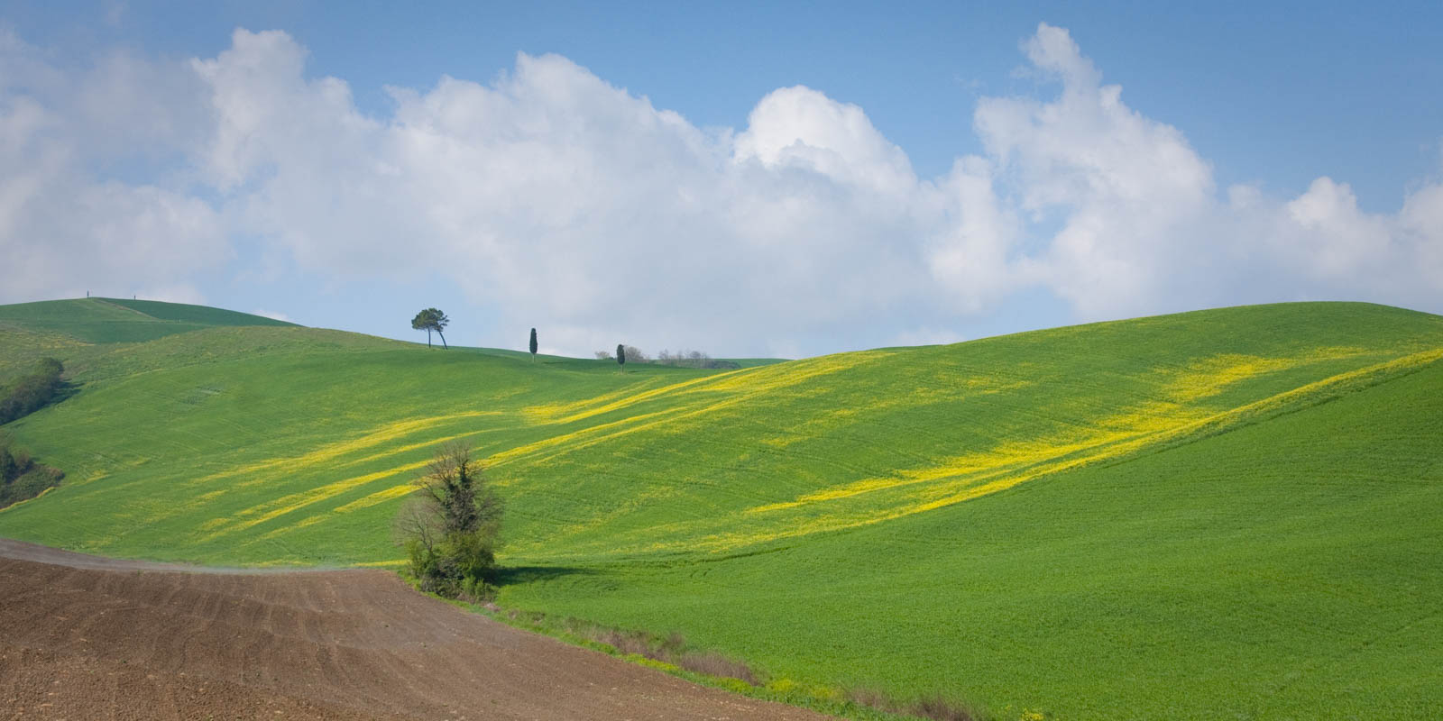 On the road to Montepulciano through the impossibly green Val d'Orcia. ©Kevin Day
