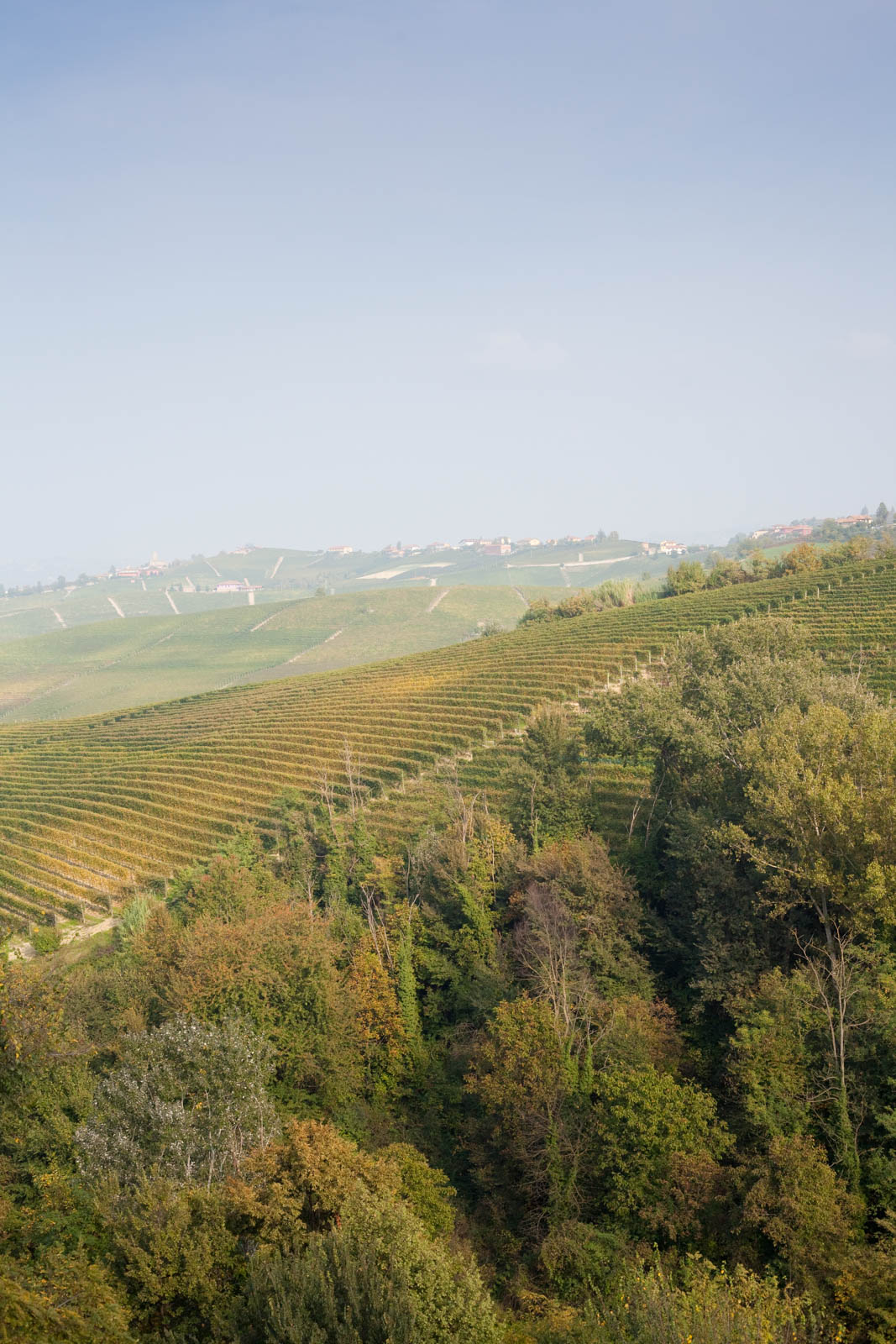 The Cannubi vineyard outside Barolo, Italy. ©Kevin Day/Tanager Photography