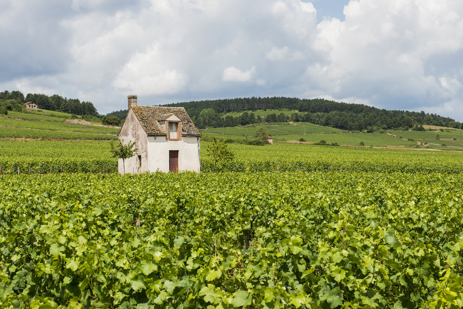 Vineyards near Beaune, France
