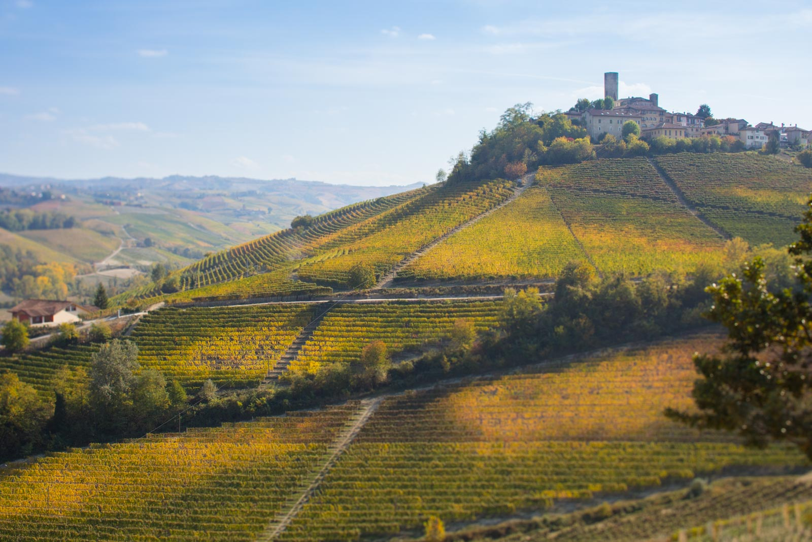 Castiglione Falletto and Barolo vineyards. ©Kevin Day/Opening a Bottle