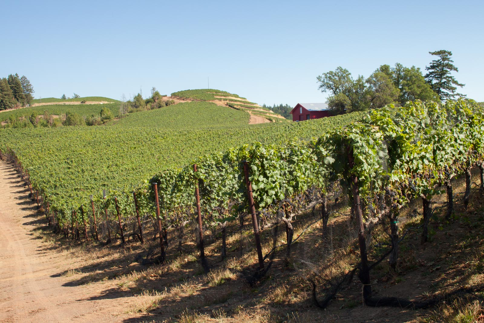 Looking south toward the highest point of the Fort Ross Vineyard. ©Kevin Day / Opening a Bottle