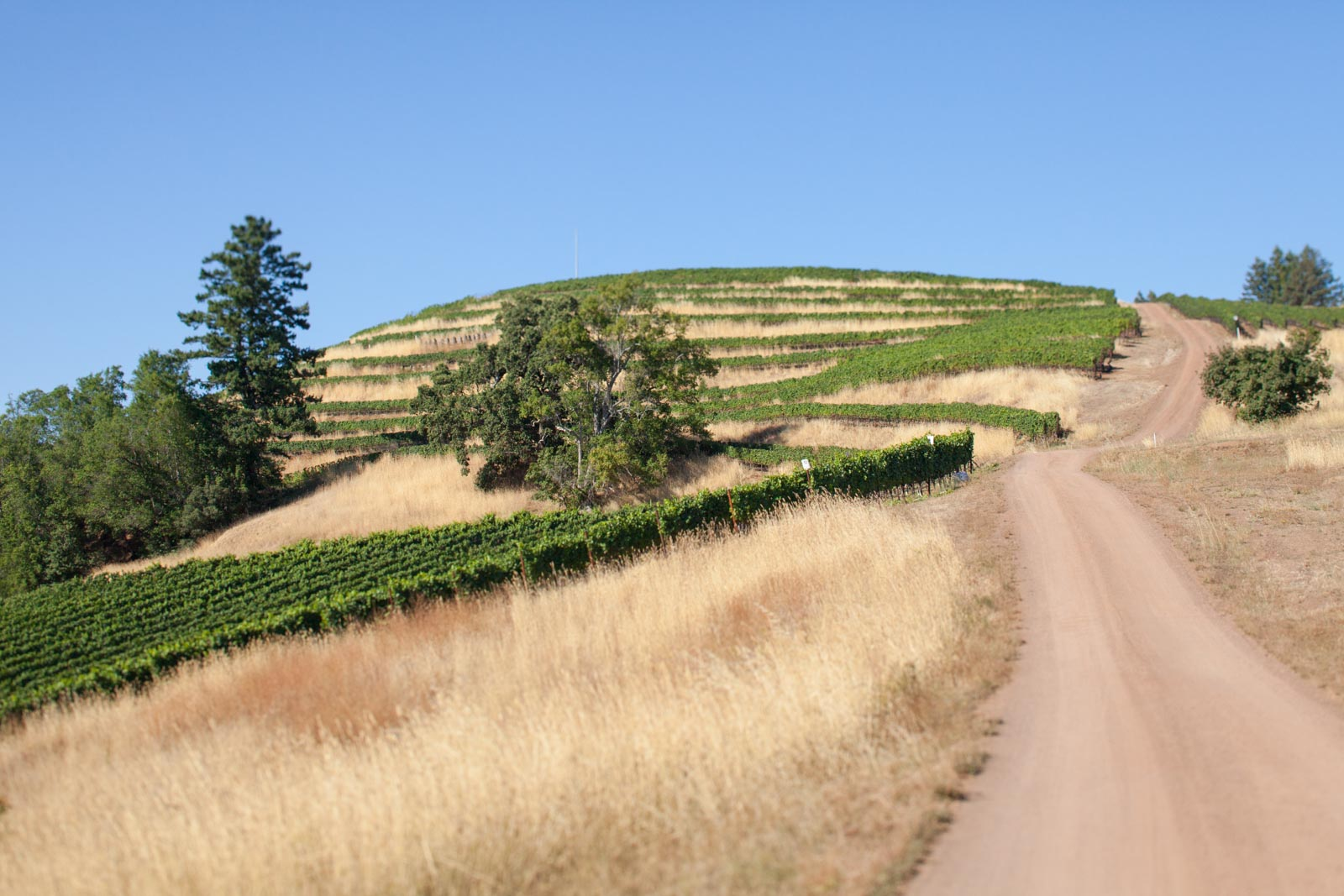 Fort Ross Winery Vineyard Sonoma Coast California Seaview ©Kevin Day / Opening a Bottle