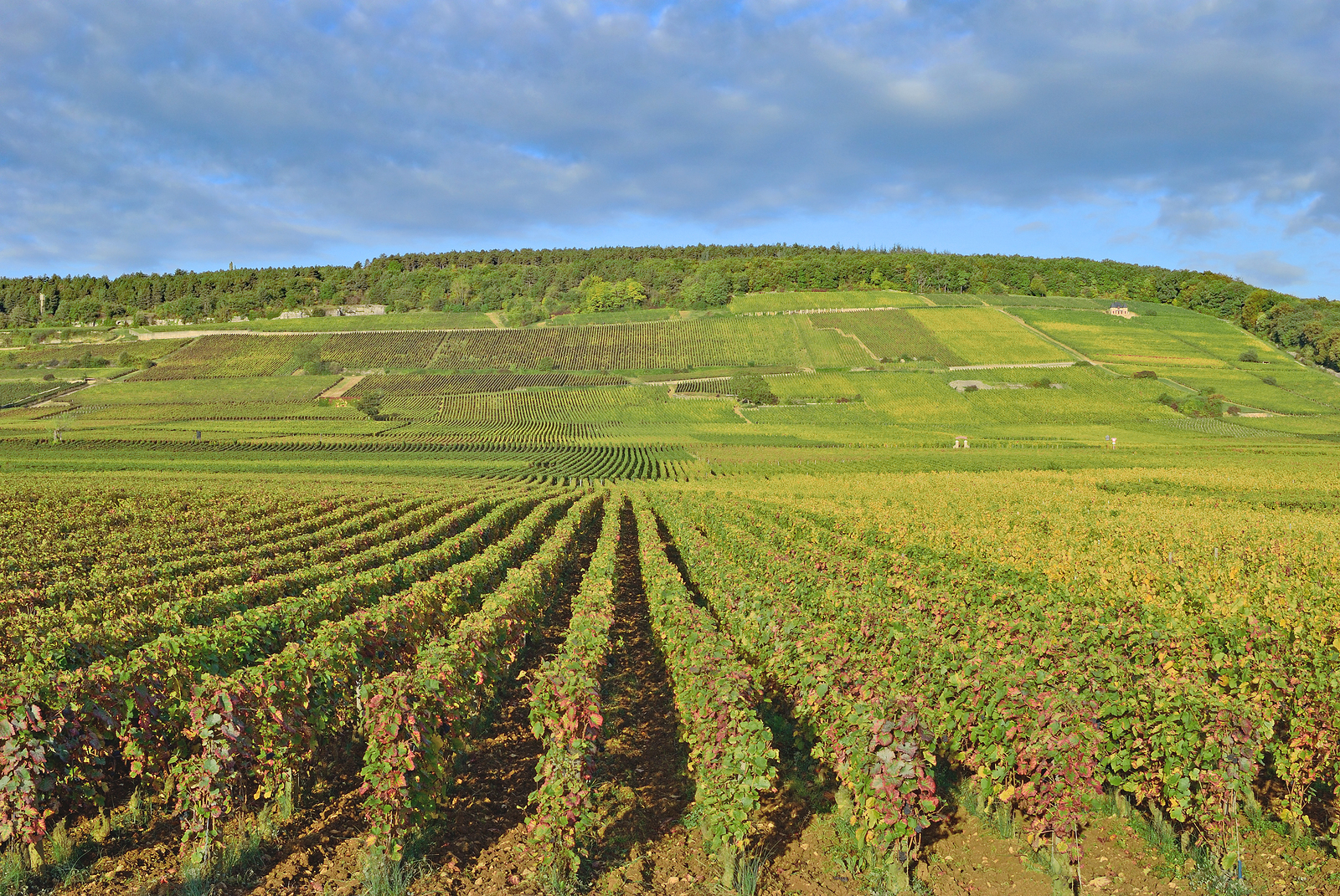 Vineyard Landscape in Burgundy near Wine Village of Chablis,France