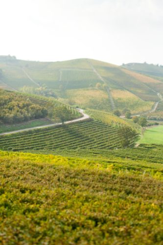 The vineyards of Barbaresco. ©Kevin Day/Opening a Bottle