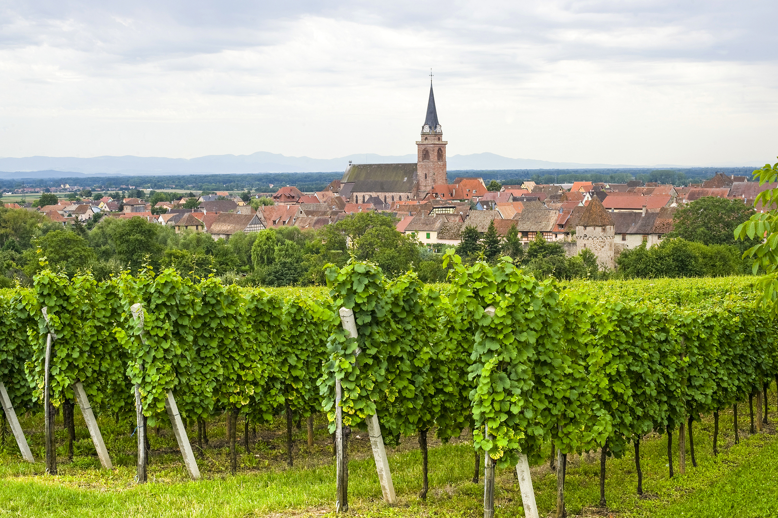 An overview of Bergheim, where Gustave Lorentz is located in Alsace, France.