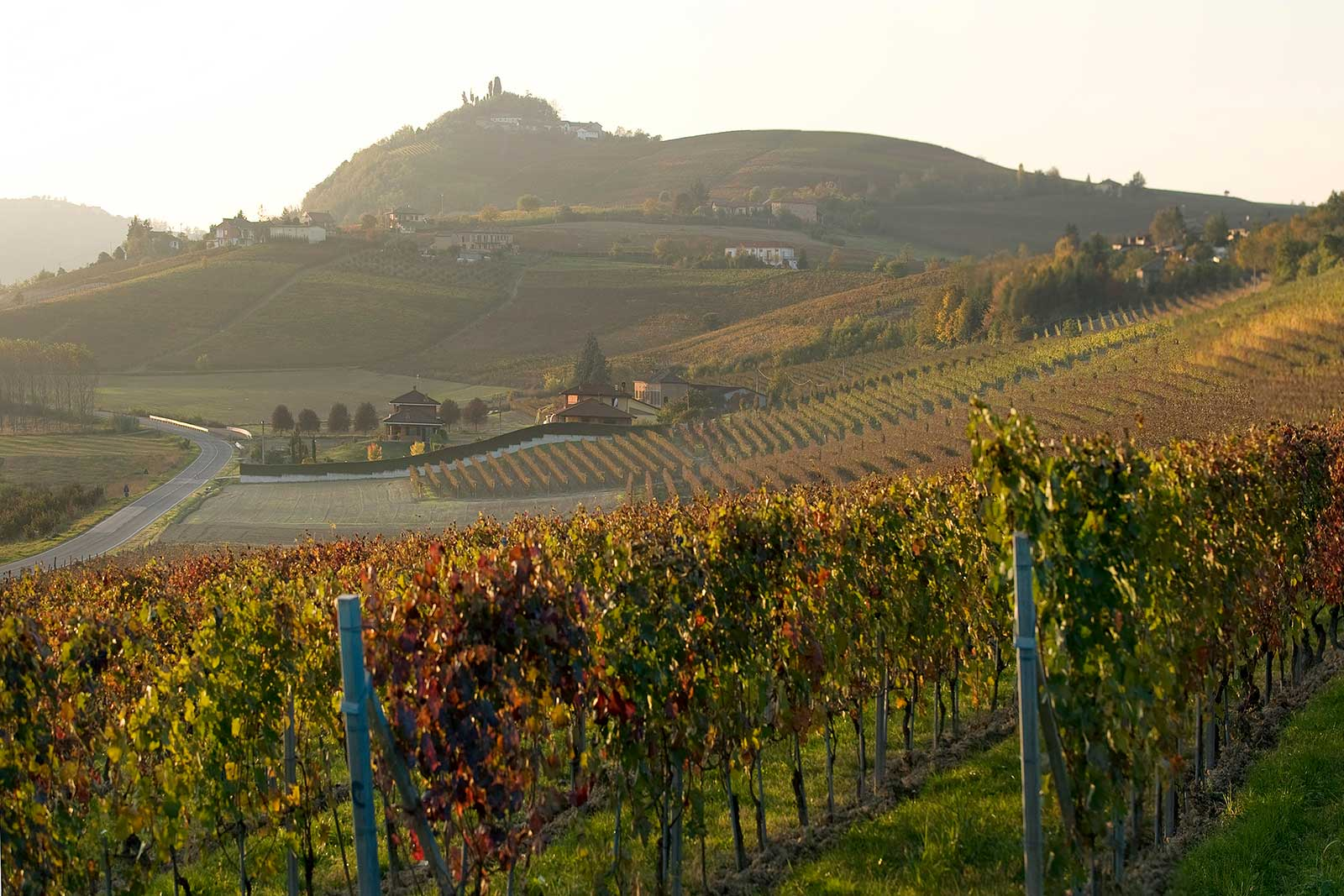 La Crena vineyard near Agliano (Asti), Italy ©Vietti WInery