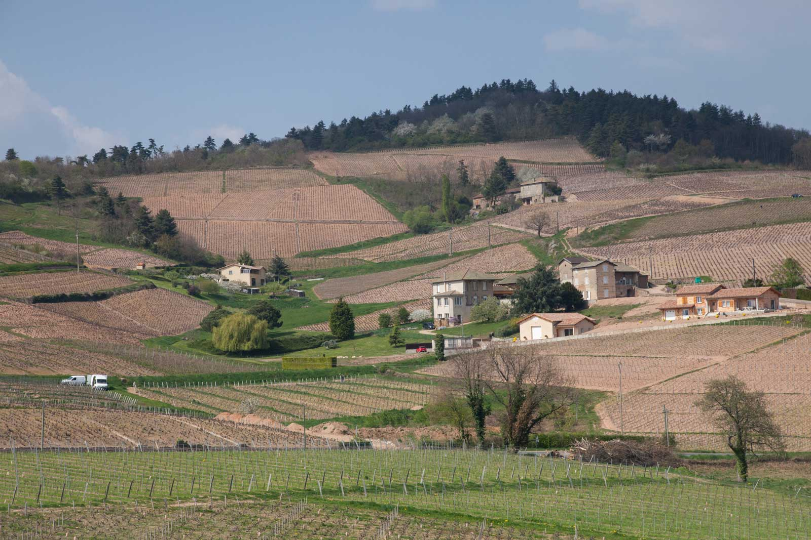 The northern edge of Fleurie. A stream drains off of this slope and separates the appellation from its neighbor, Moulin-à-Vent. ©Kevin Day / Opening a Bottle