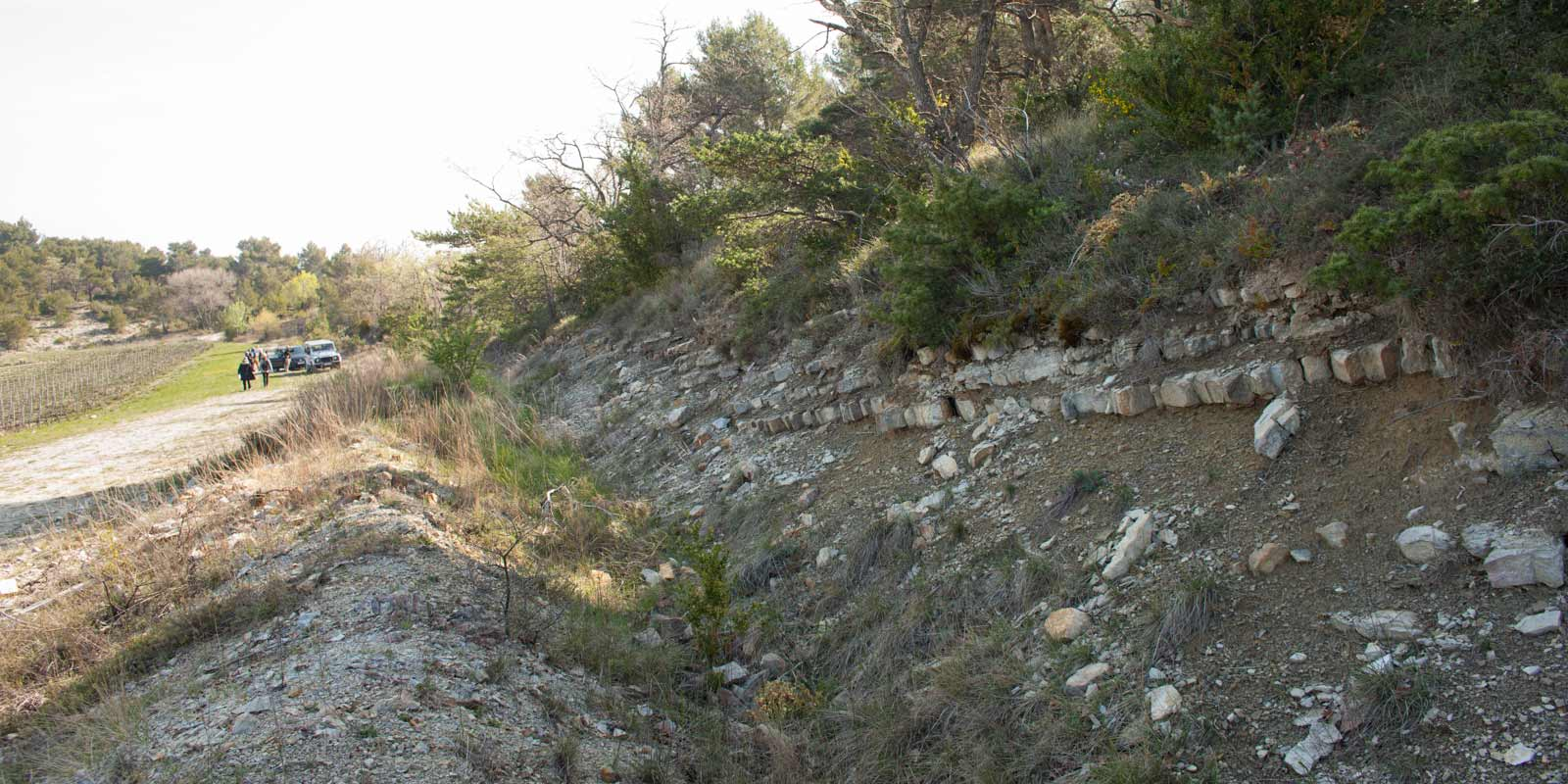 A trench upslope from the blocks of Viognier, Grenache Blanc and Roussanne revealed several rocks with obvious fossils. ©Kevin Day / Opening a Bottle