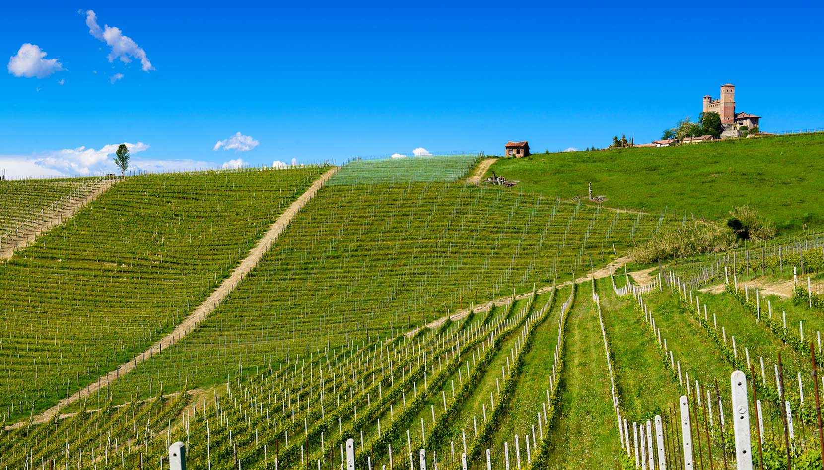 The Vignarionda Cru vineyard of Barolo in the village of Serralunga d'Alba. ©Oddero