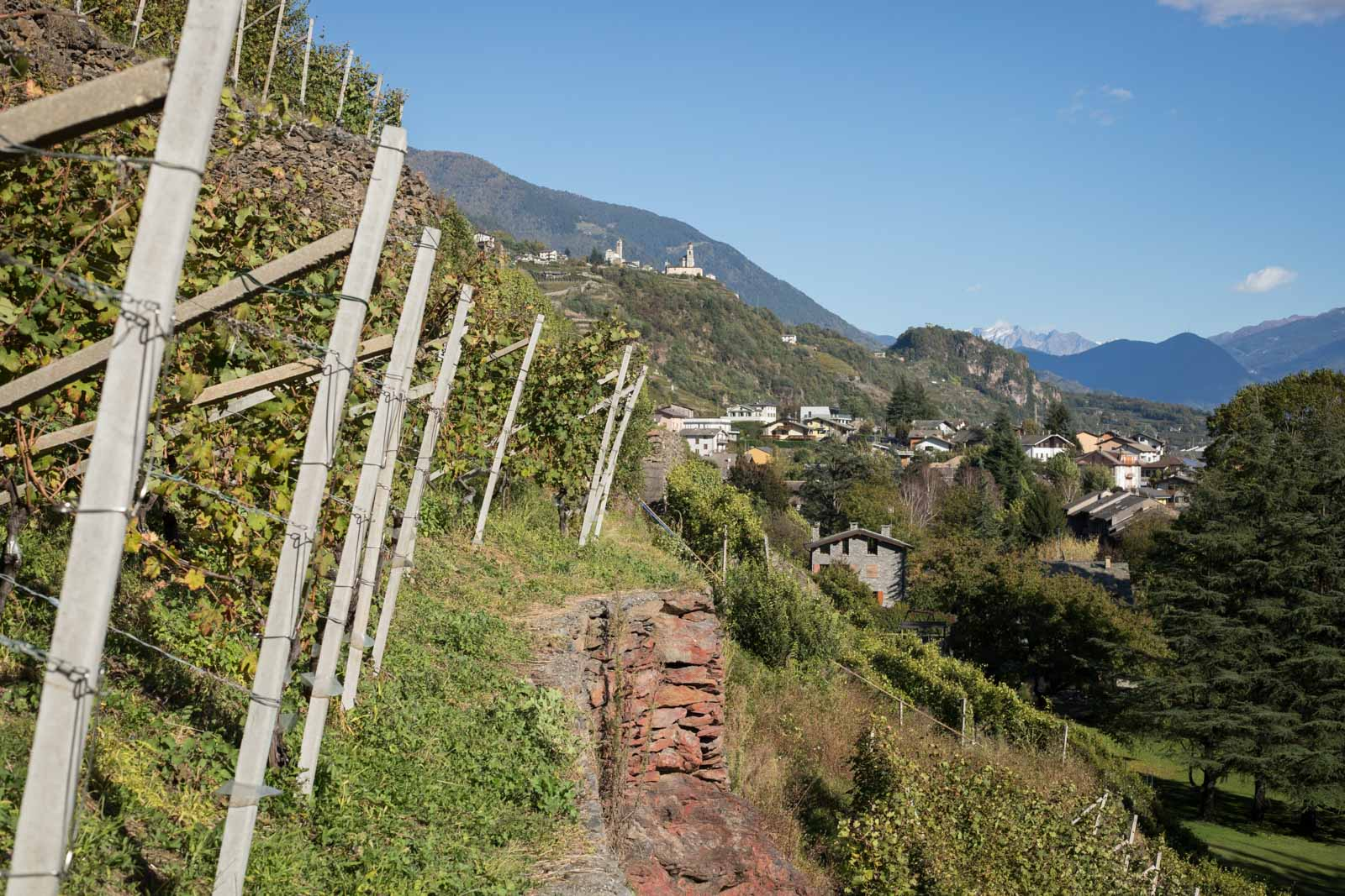 Ar.Pe.Pe.'s Rocca de Piro vineyard in the Valtellina Superiore Grumello zone. ©Kevin Day / Opening a Bottle