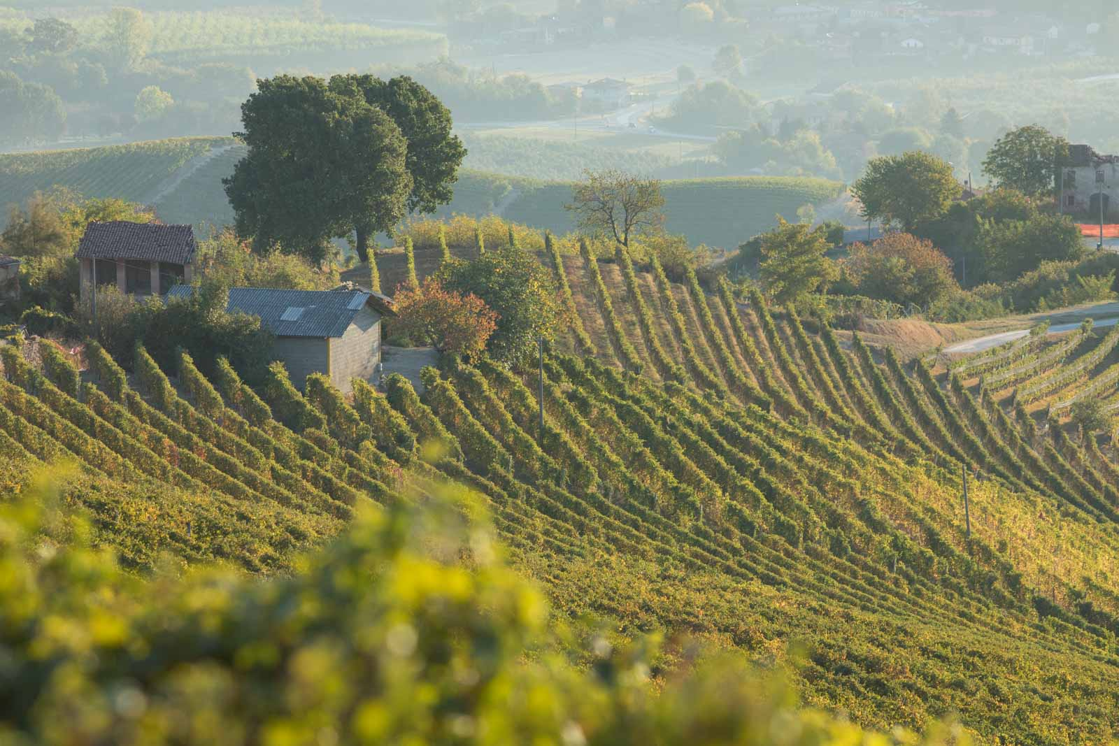 The magnificent beauty of the Brunate cru in between the towns of La Morra and Barolo. ©Kevin Day/Opening a Bottle