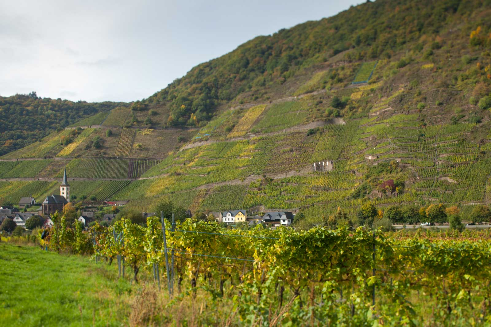 A view of the town of Bremm and the Bremmer Calmont vineyard. ©Kevin Day/Opening a Bottle