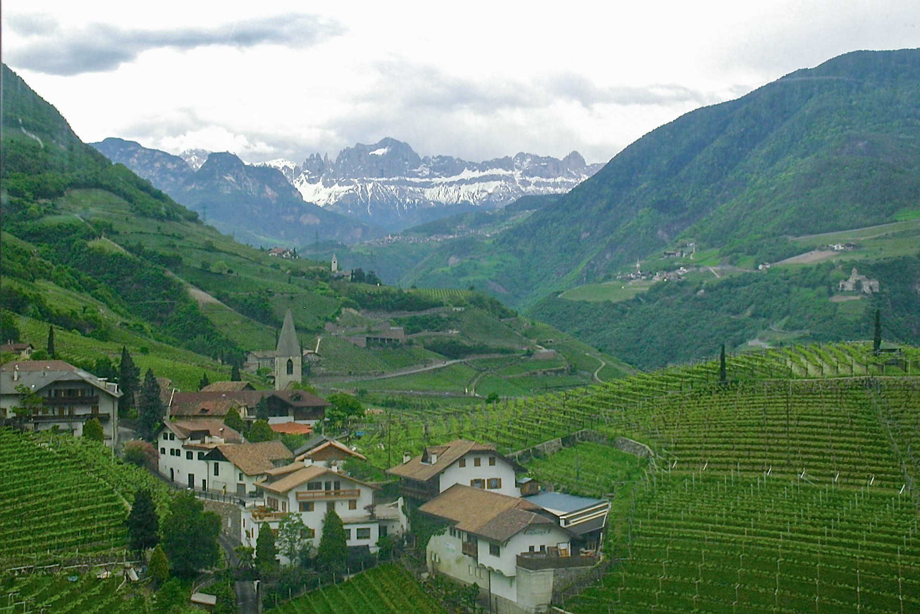 Vineyards above Bolzano, Alto Adige, Italy