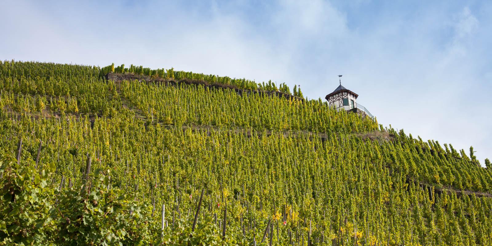 Doctor Vineyard, Bernkastel-Keus, Germany, Essential Winemakers