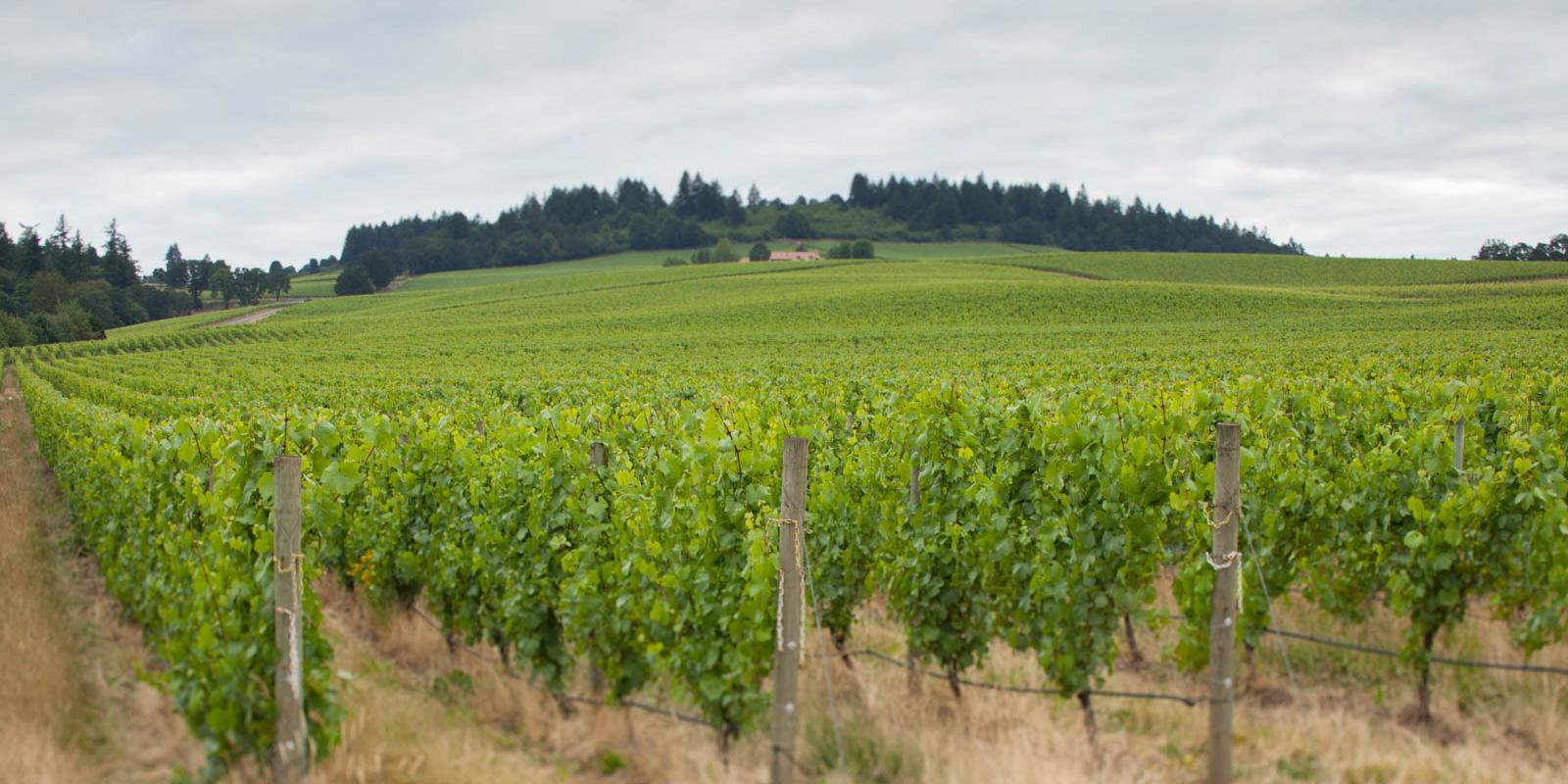 Stoller Vineyards, Willamette Valley, Oregon Essential Winemakers