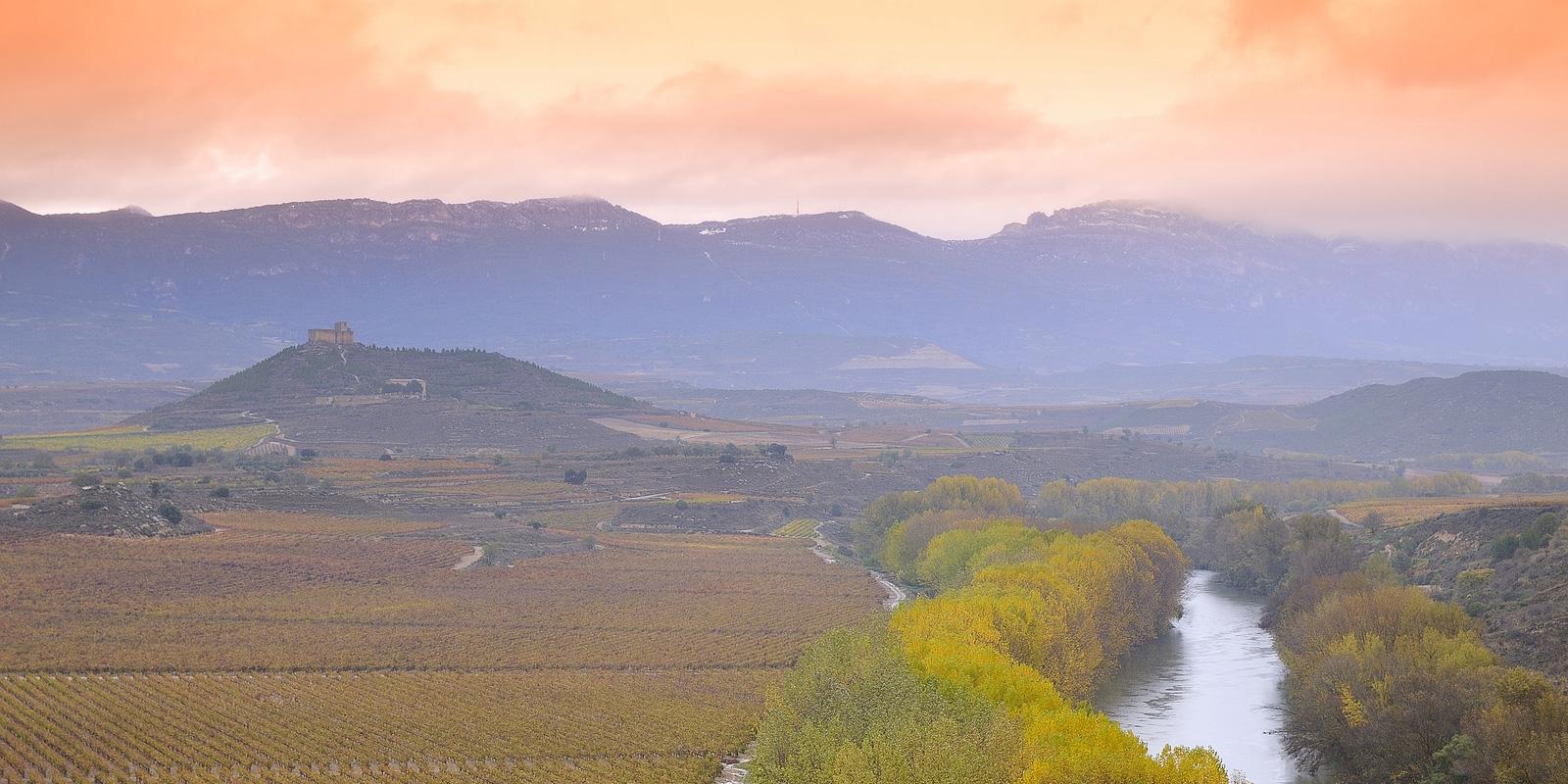 Vineyards in the province of La Rioja in Spain, Essential Winemakers