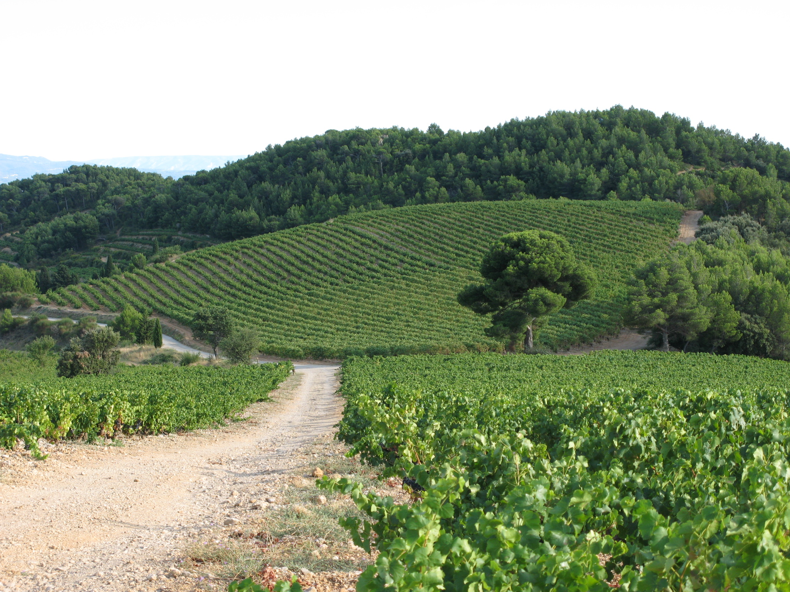 Vineyard in Gigondas, France. ©Robert Cudmore, Flickr user: Licensed through Creative Commons license