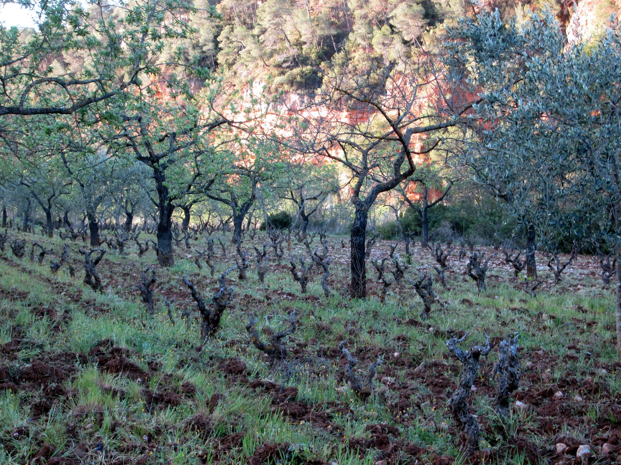 Planella vineyard, Montsant / ©Cellars Joan d'Anguera