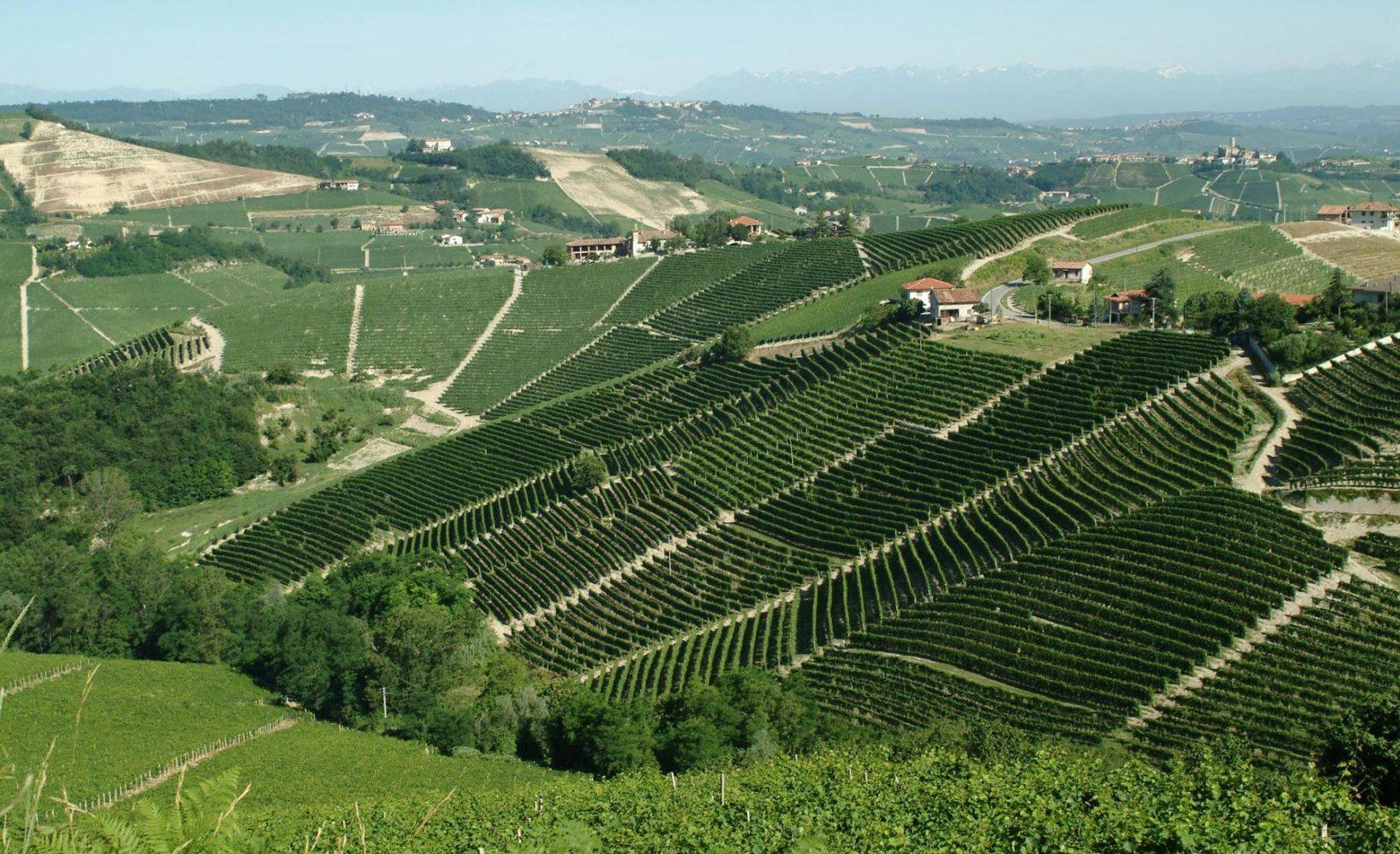 Ornato vineyard near Serralunga d'Alba, Italy. ©Pio Cesare/Maisons Marques & Domaines