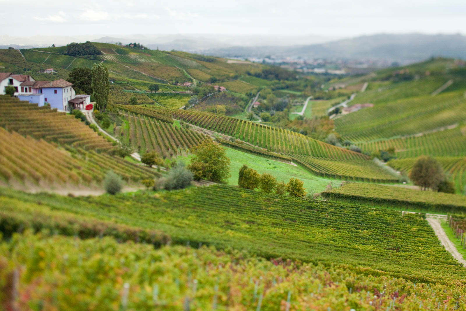 The vineyards of the Barbaresco wine region in Piedmont, Italy. ©Kevin Day / Tanager Photography