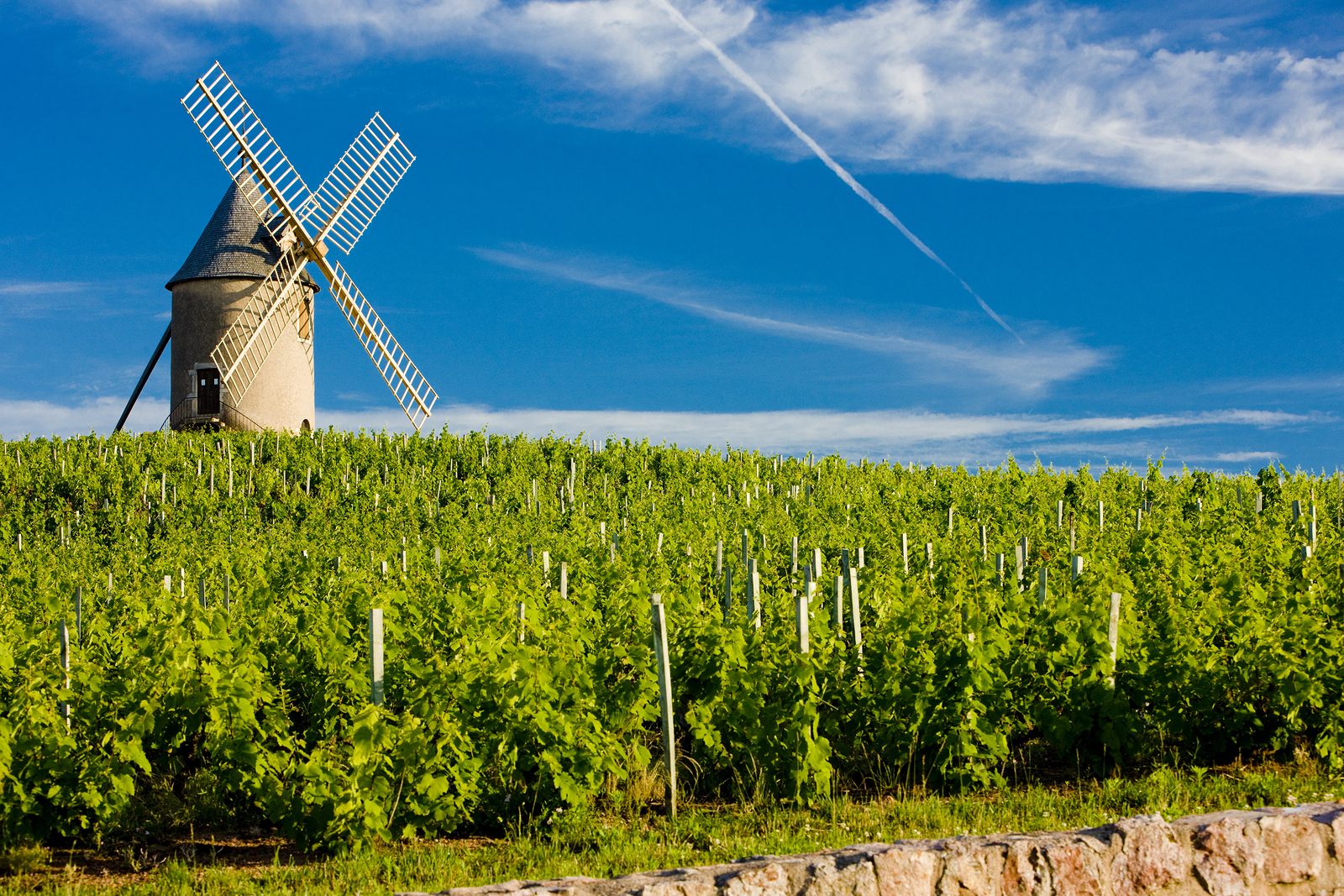 Windmill and vineyard, Moulin-à-Vent, Cru du Beaujolais, Burgundy, France