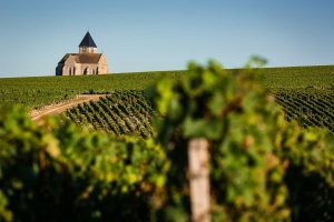 First-Taste Guide to Chablis
