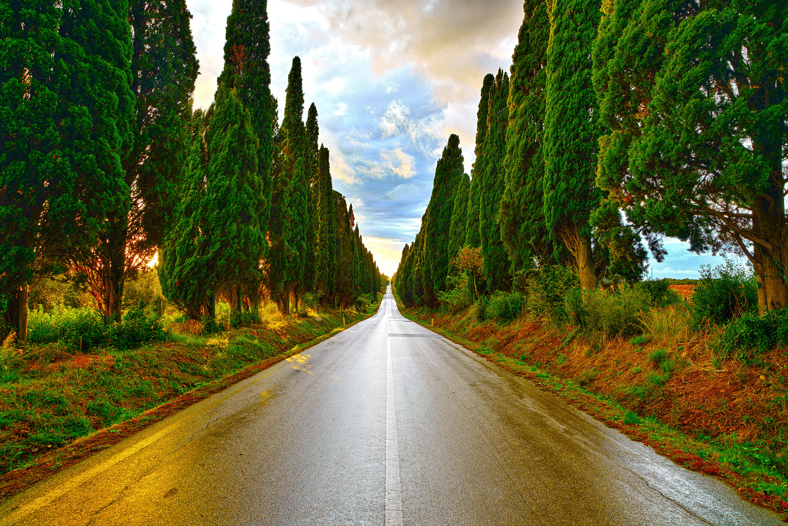 Bolgheri famous cypresses trees straight boulevard landscape. Maremma landmark Tuscany Italy Europe. This boulevard is famous for Carducci poem.