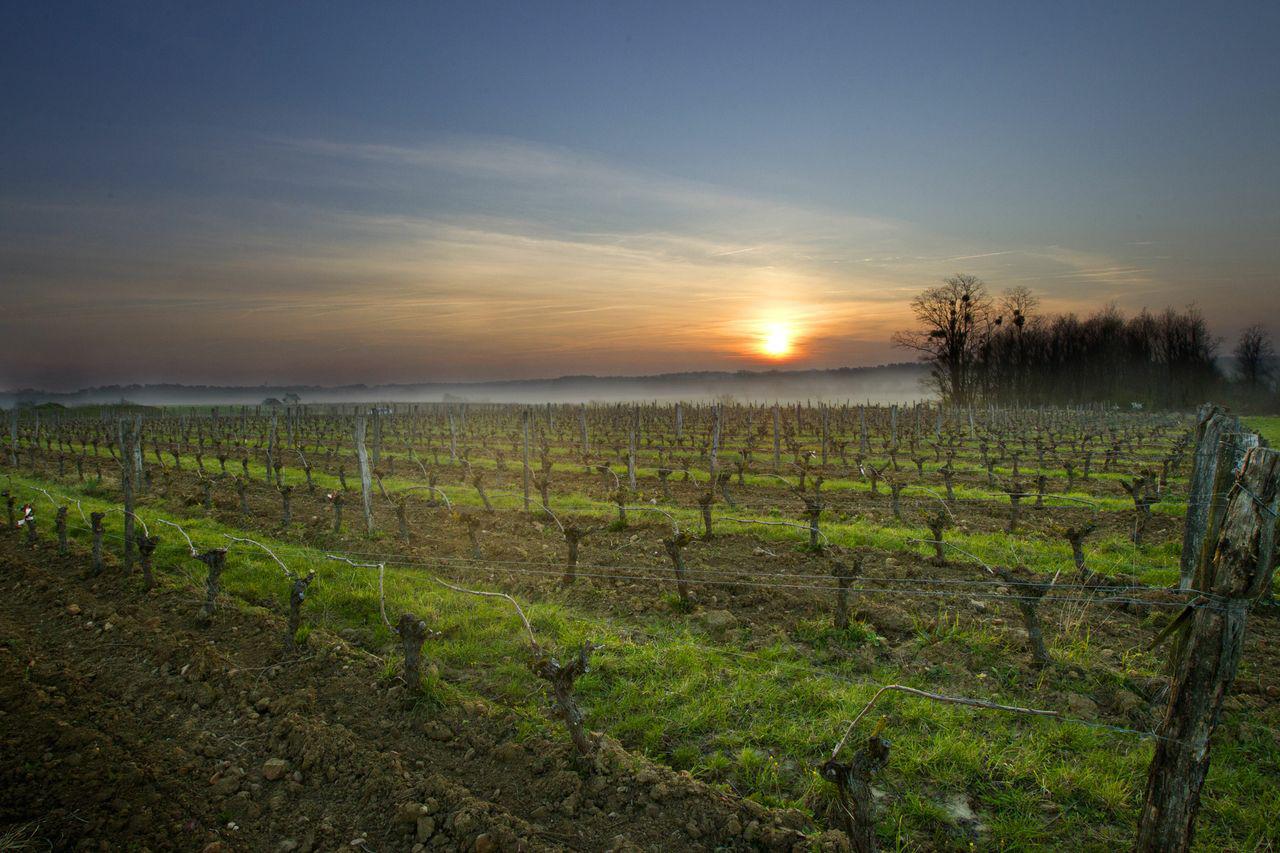 Clau de Nell Vineyard, Anjou, Loire Valley, France