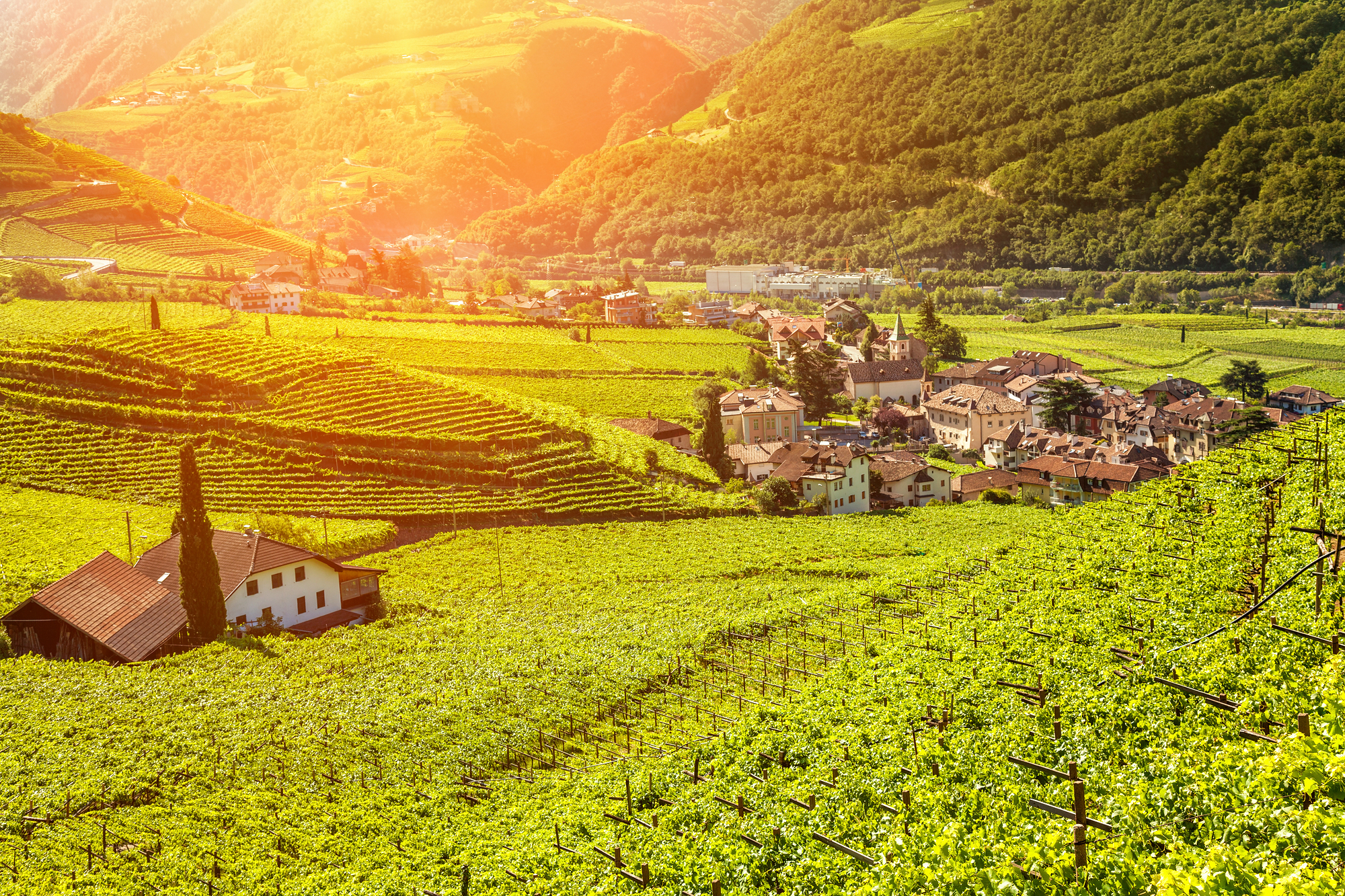 Beautiful sunset view over a vineyard in Bolzano Italy