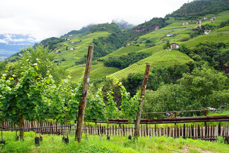 Vineyards near Bolzano, Italy.