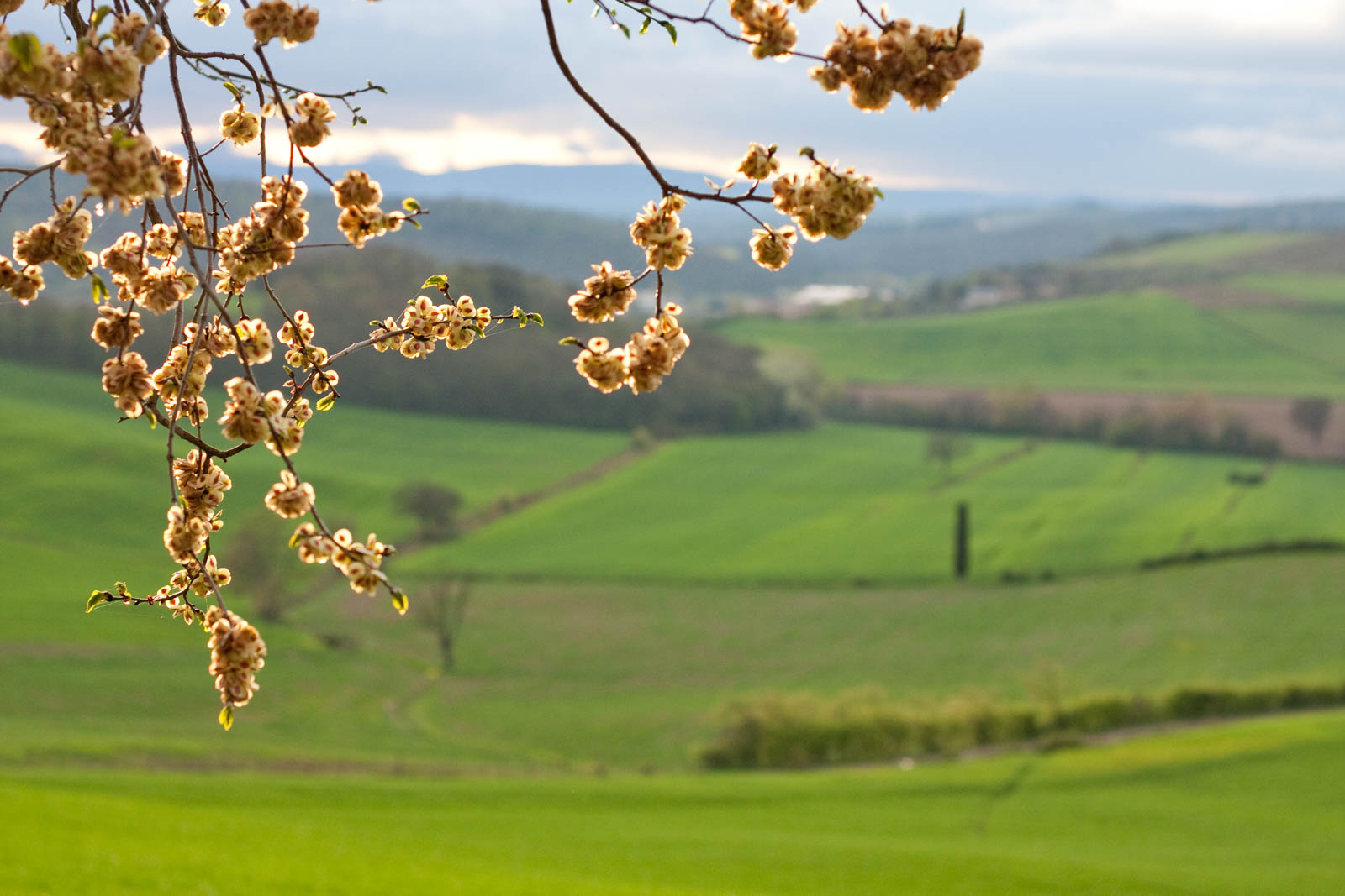 Chianti in spring time, ©Kevin Day