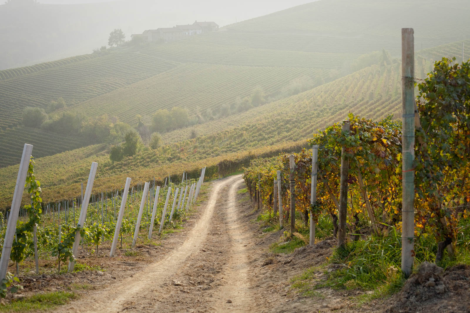 The Brunate vineyard between La Morra and Barolo, Italy. ©Kevin Day/Tanager Photography