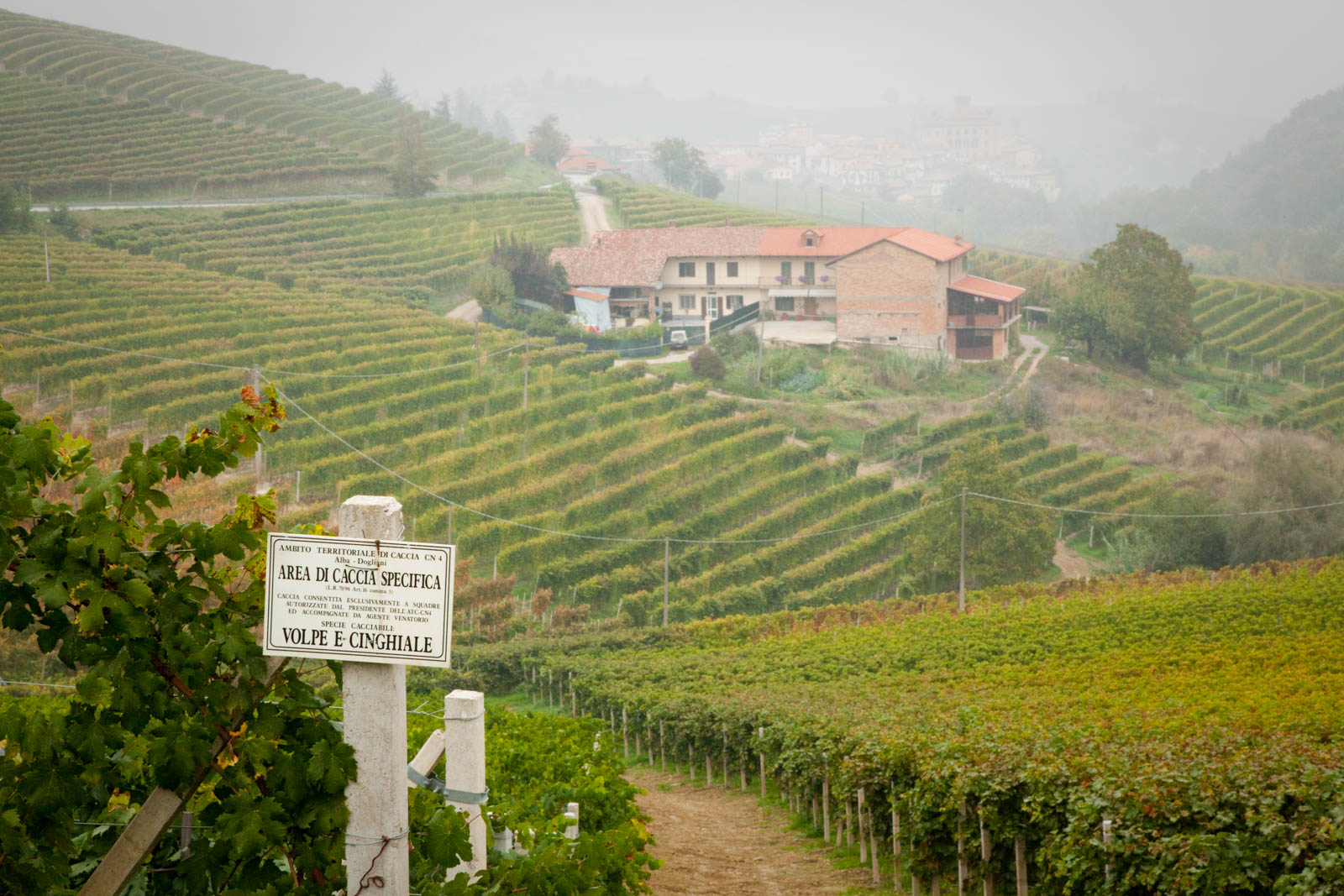 The Ravera Vineyard (Cru) outside Barolo, Italy. ©Kevin Day