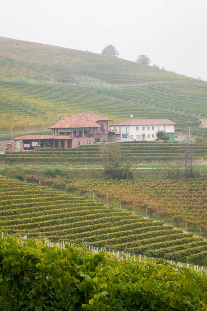 20121015-Monforte d'Alba-0003