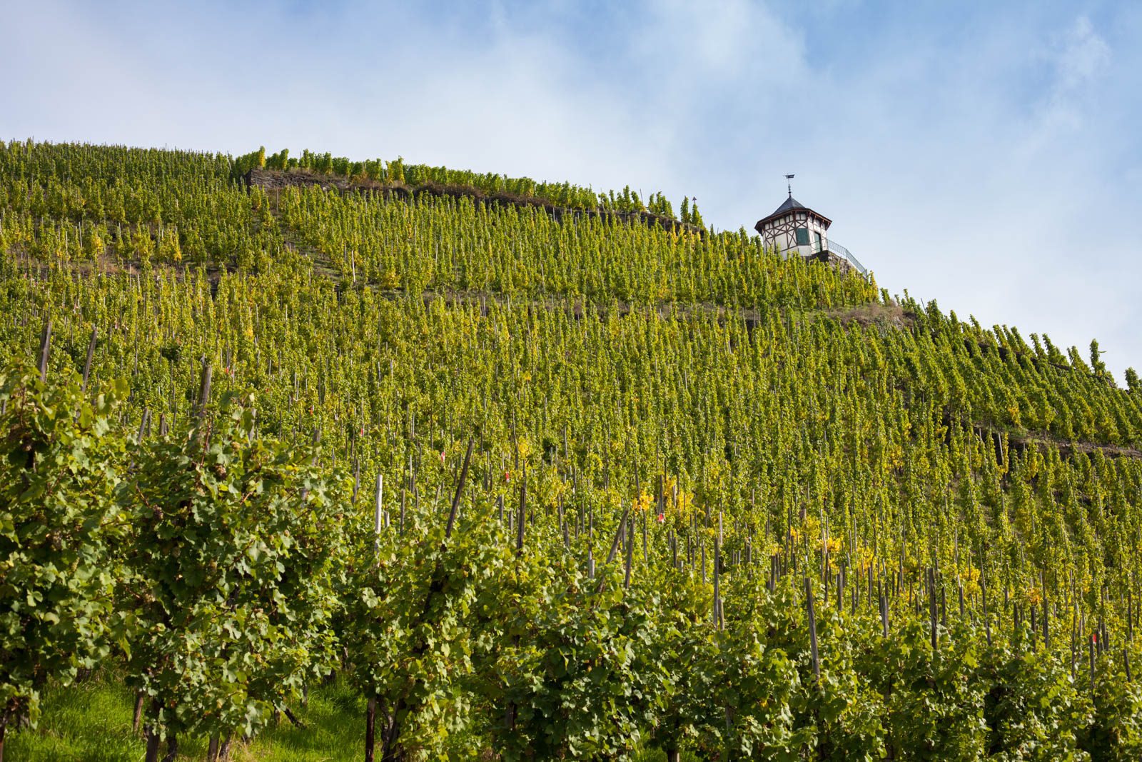 Doctor Vineyard, Bernkastel-Keus, Germany