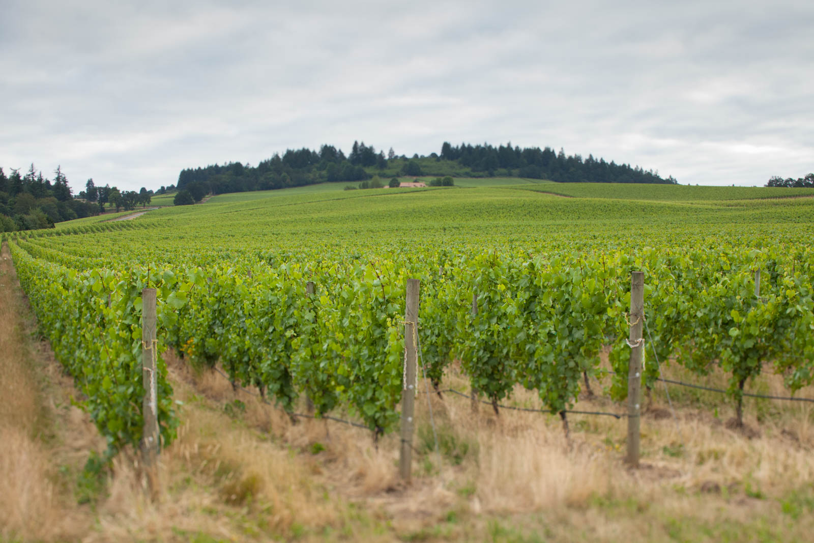 Stoller Vineyards, Willamette Valley, Oregon
