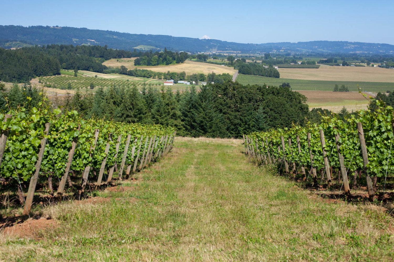 Penner-Ash estate vineyard, Mount Hood, Willamette Valley, Oregon