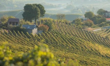 Vineyards below La Morra in the Barolo DOCG of Italy. ©Kevin Day/Opening a Bottle