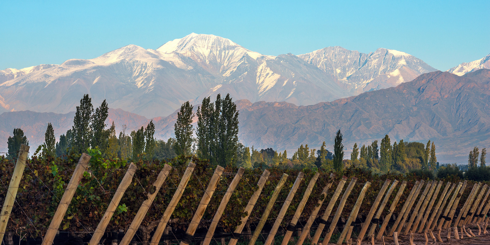 Mendoza, Argentina vineyards