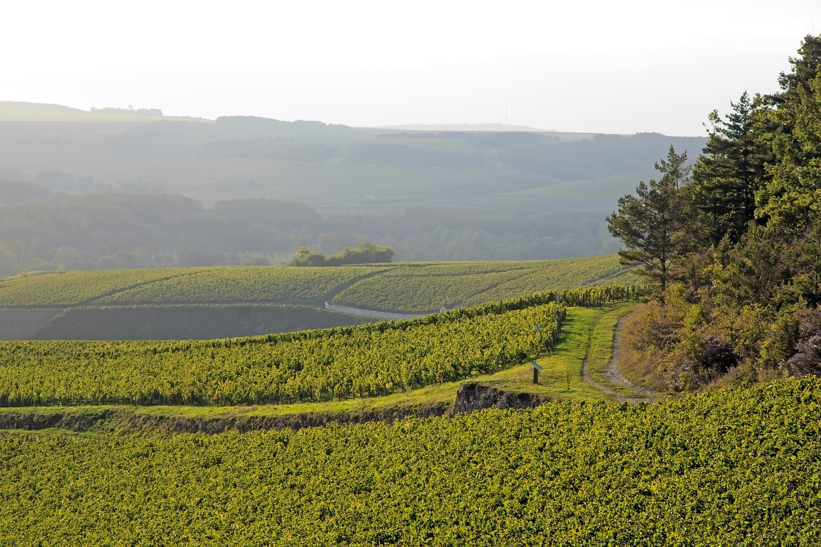Landscape of vineyards near Chablis, France.