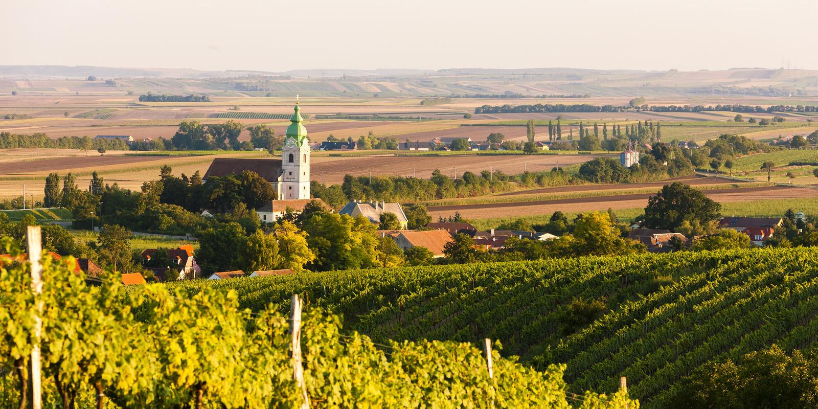 vineyard near Unterretzbach, Lower Austria, Austria, Essential Winemakers