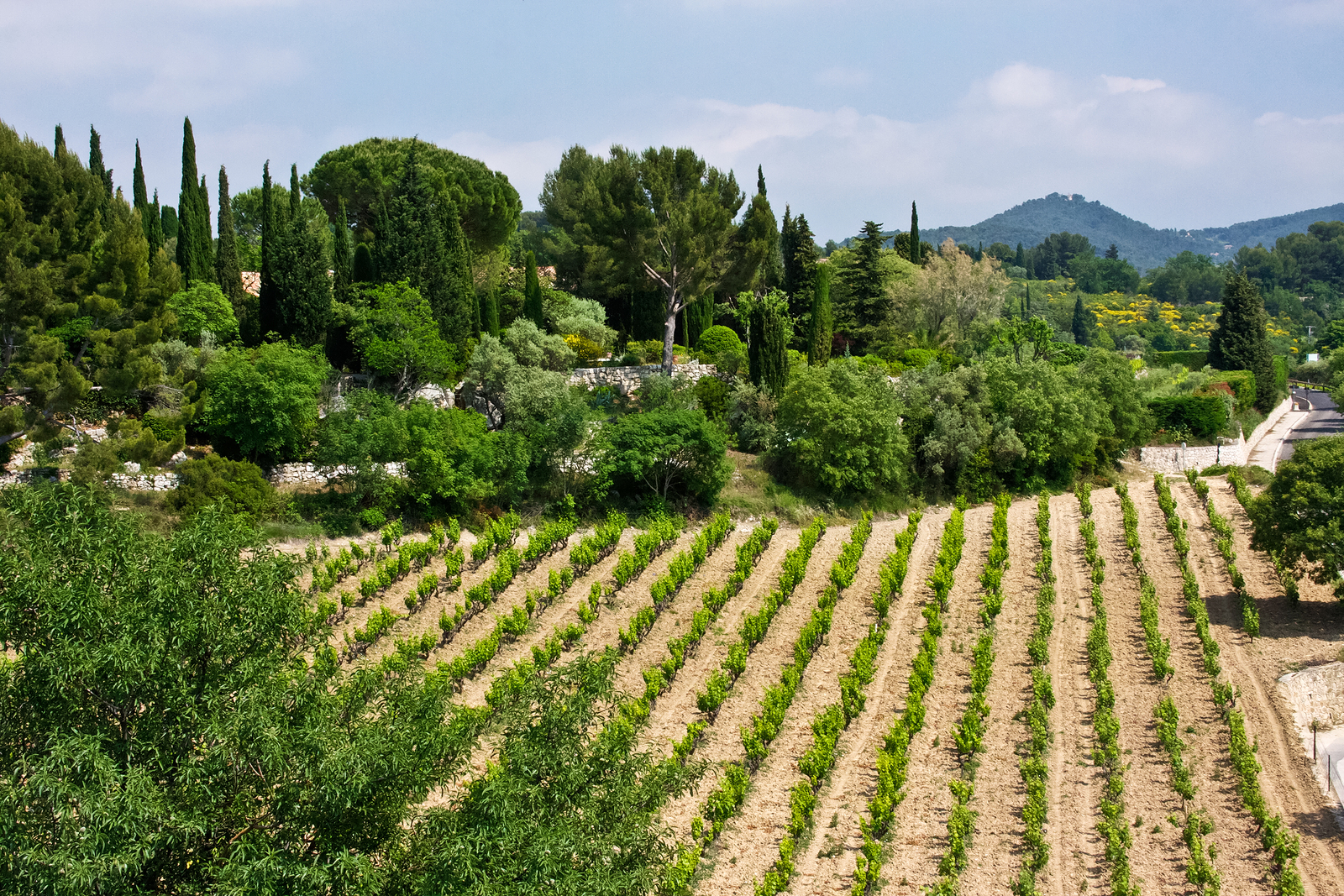 View over the vineyards forests and hills of the Provencal countryside